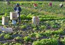 La Trinidad enhances organic agriculture