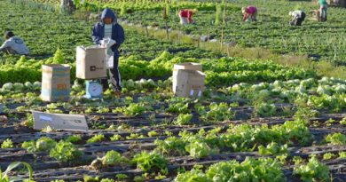 Gov't urged to prioritize vaccination of vegetable farmers