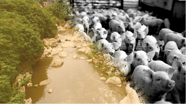 Piggery farm complainant hits back at Sablan mayor