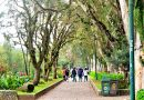 Plant poaching reported in Baguio parks