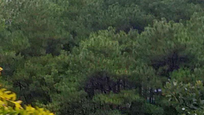 La Trinidad enhances conservation of forests