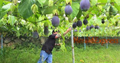 Benguet institutionalizes organic agriculture